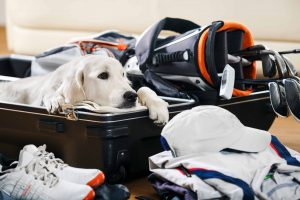 PuttBANDIT | Visibly Better Putting | Dog in suitcase next to clubs