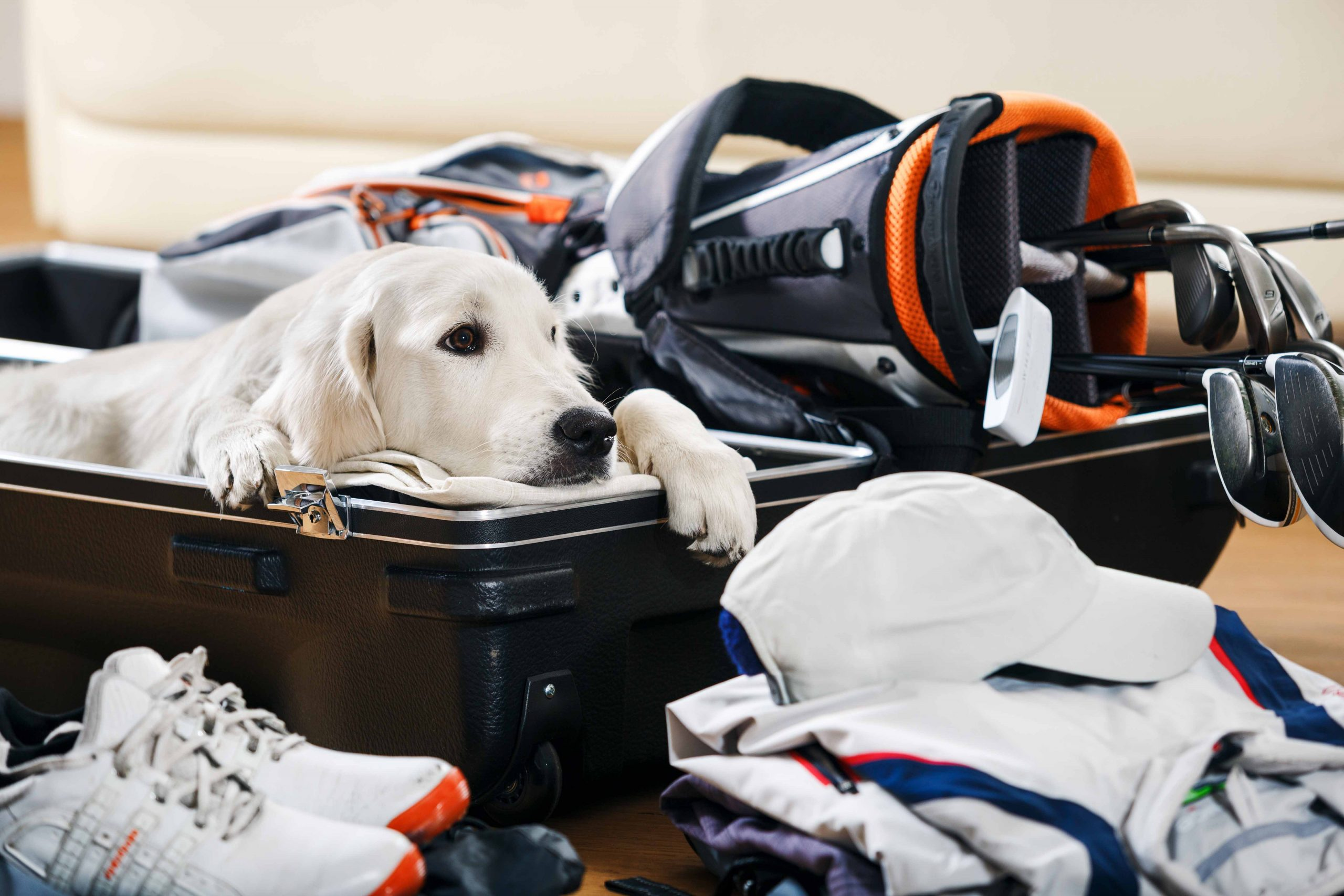 PuttBANDIT   Visibly Better Putting   Dog in suitcase next to clubs