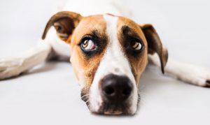PuttBANDIT | Visibly Better Putting | Dog's head